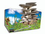 Blue Oyster Mushroom Kit